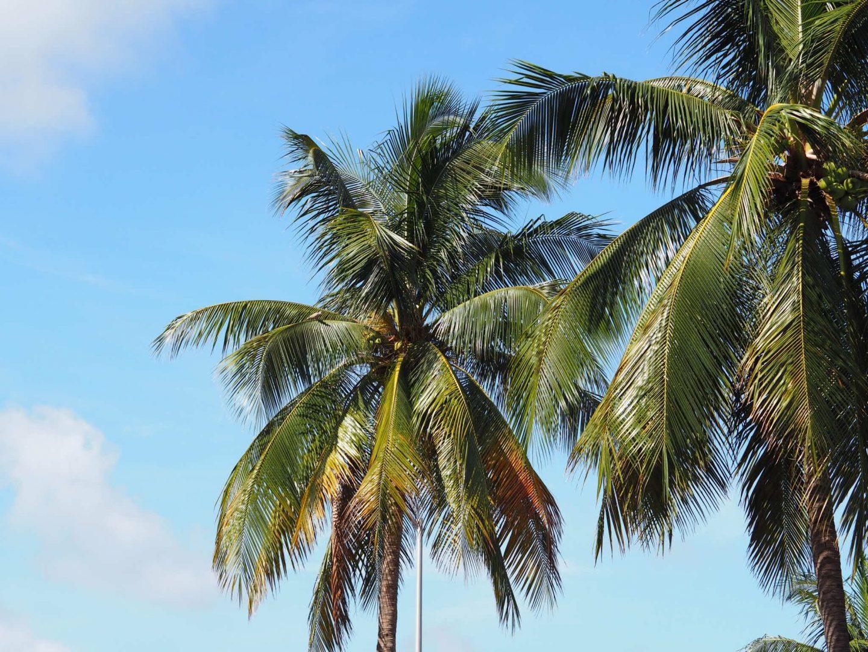Missing Miami